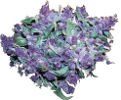 bud_purple.png